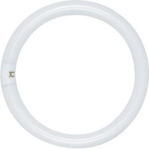 Satco S6501 22 watt T9 Circline Fluorescent 6500K Daylight 76 CRI 4-Pin base